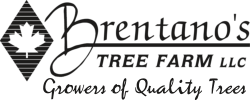 Brentano's Tree Farm Logo
