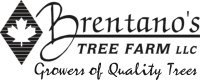 Brentano's Tree Farm